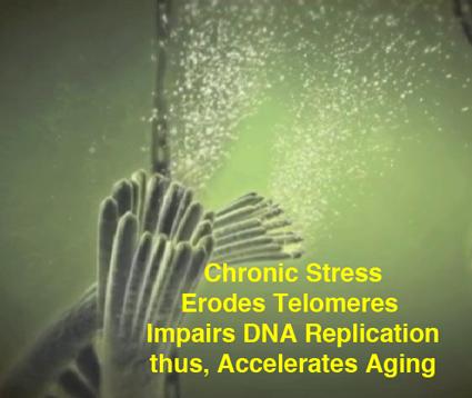 eroded-telomeres.png